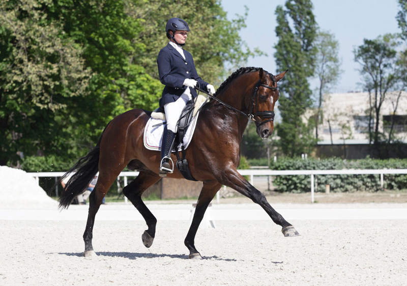 Europe horse riding