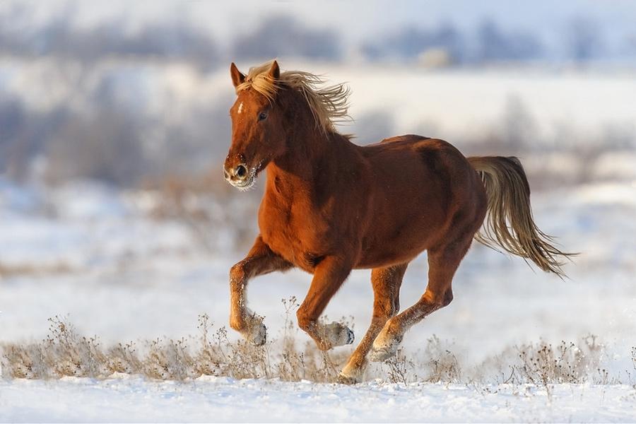 Лошадь-холерик