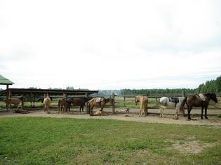 Катание на лошадях и пони на территории заказчика,