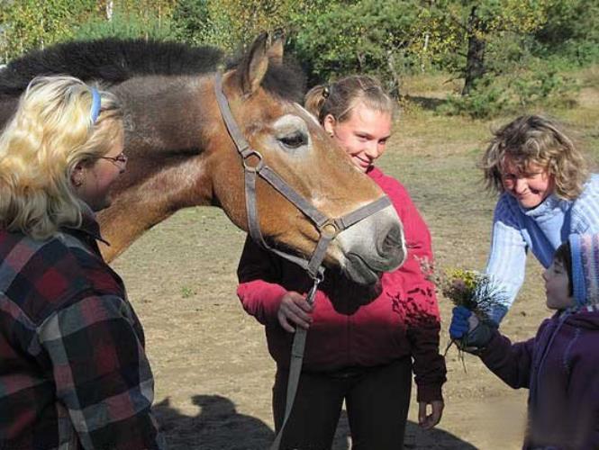 Общение с лошадкой