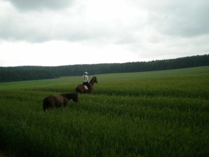 Выезд в поле